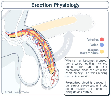 erection before and after ED drugs like Cialis and Levitra